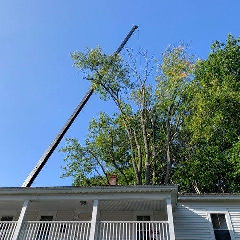 8000 lb Ash tree crane removal pic 1