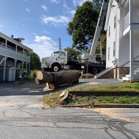 8000 lb Ash tree crane removal pic 2